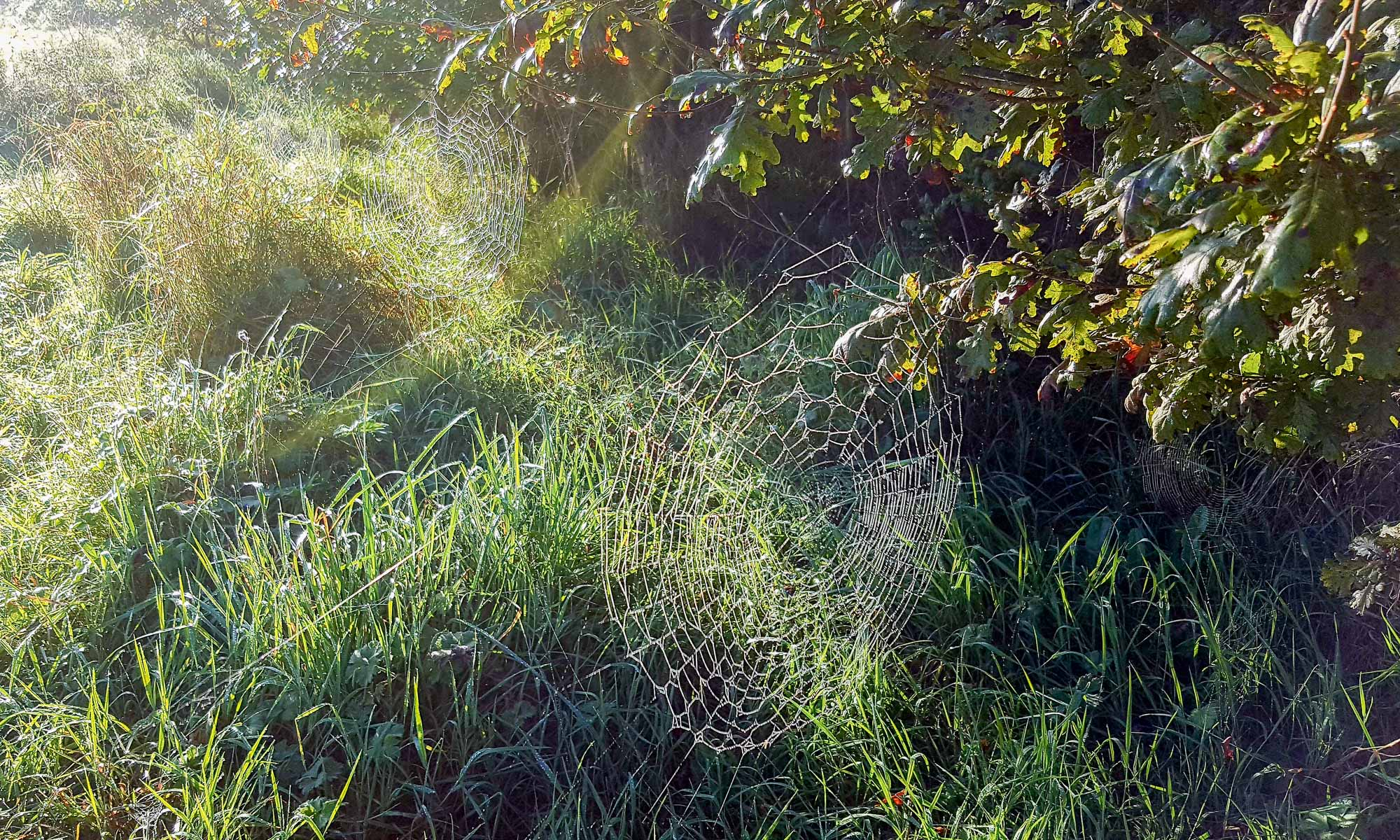 September cobwebs by MJW