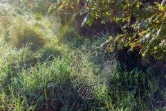 September cobwebs by MJW